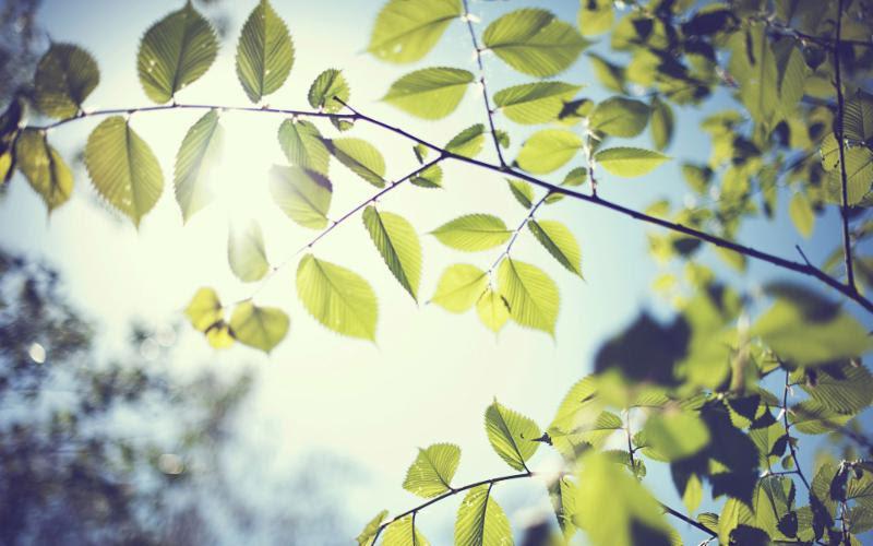 sunshine-leafs