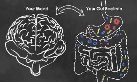 brain-gut relationship